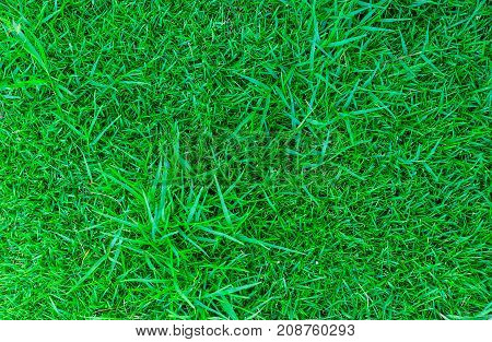 Top view of lawn floor, lawn for background