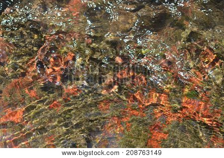 Fresh River Water And Colorful Bottom