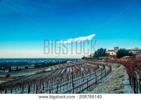 Snowy Morning In The Vineyard