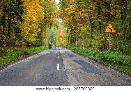 AUTUMN ROAD - Asphalt road through beech forest