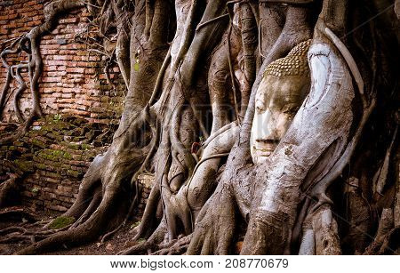 Buddha head statue made by sandstone in old root of bodhi tree.Ancient buddha head in Wat MahathatAyutthaya Thailand.
