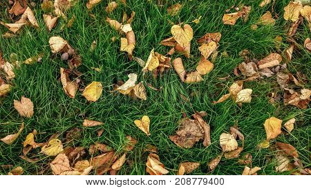 Yellow leaves on the grass autumn, spring grass the field, view from the top, fallen leaves scattered, autumn background on the wild.