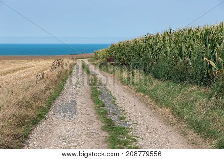 Country road along corn field near coast of Normandy, France