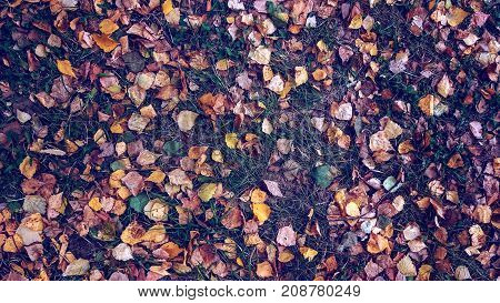 Yellow leaves on the grass autumn, spring grass on the field, view from the top, fallen leaves scattered, autumn background on wild.