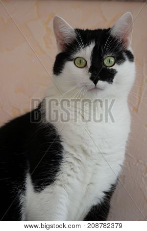 White cat with black spots on light background.