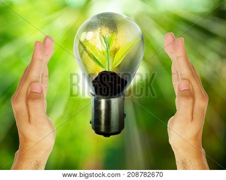 Light bulb with small plant growing inside with abstract fresh green blurred nature and bokeh background with wooden tabletop Eco technology concepts.