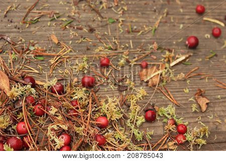 Red cranberry with damp moss dry leaves and pine needles on wooden background