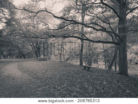 Autumn park with a lonely bench and empty pathway. Black and white image