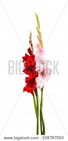 beauty bouquet gladiolus flower on white background