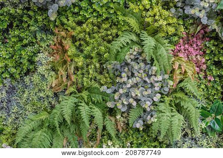 Vertical Garden Wall Background