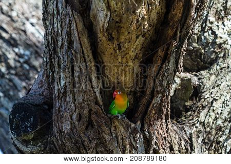 The bird selects the nest in the hollow, Serengeti, Tanzania