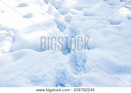 Winter Trail, The Road In The Snow