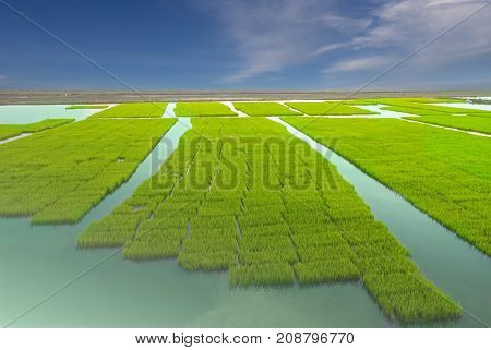 Young Rice Tree In The Rice Field On Blue Sky