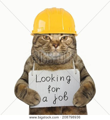 The cat builder with a sign around his neck. It says