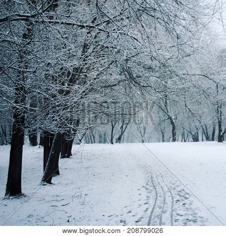 Pathway Through A Winter Park. Aged Photo.