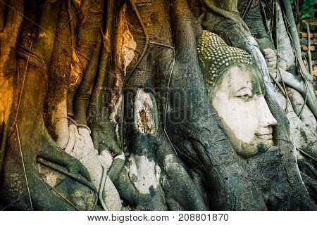 Amazing Buddha Head Statue In Bodhi Tree Roots  At Wat Maha That Ayutthaya. Buddha Head Made From Sa