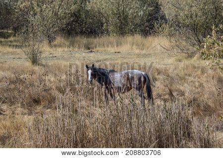 Lone roan horse in a field in Autumn with brush all around.