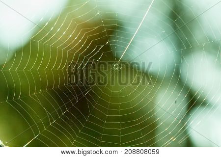Spider web macro nature morning insect background