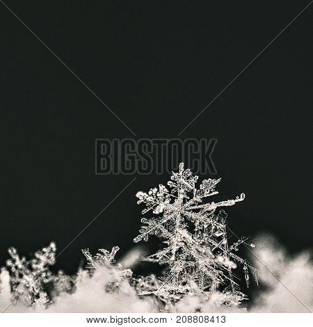 Snowflake. Macro Photo Of Real Snow Crystal. Beautiful Winter Background Seasonal Nature And The Wea