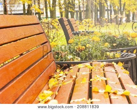 Wooden bench in the parkPark with bench on alley in yellow autumn