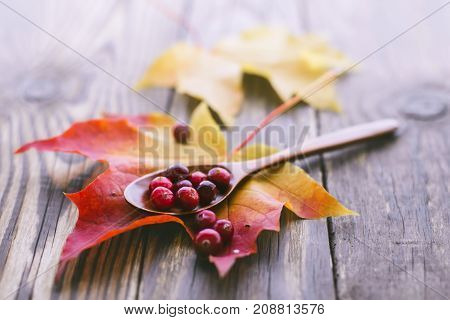berries cranberries on a wooden spoon and a maple leaf with a shallow depth of field