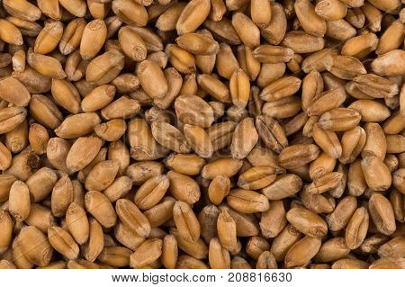Whole Background Of Wheat Grain