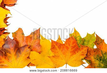 A scattering of beautiful fallen maple leaves isolated on white background. The basis for design. Frame