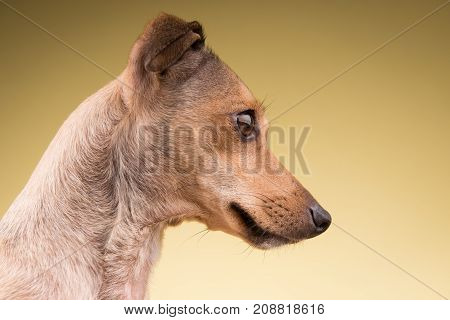 Small dog muzzle face looking to the side