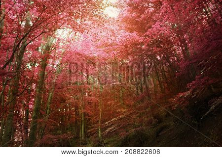 Colorful gold autumnal forest in the mythical Mount Olympus