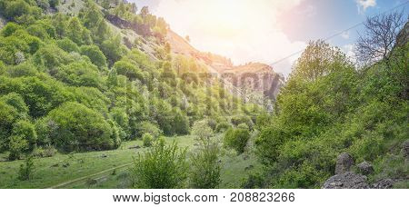 Road passing through a beautiful gorge among the mountains covered with green vegetation and trees. Panoramic image