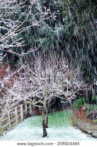 Winter season in nature in the backyard.