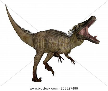 Austroraptor dinosaur roaring isolated in white background -3D render