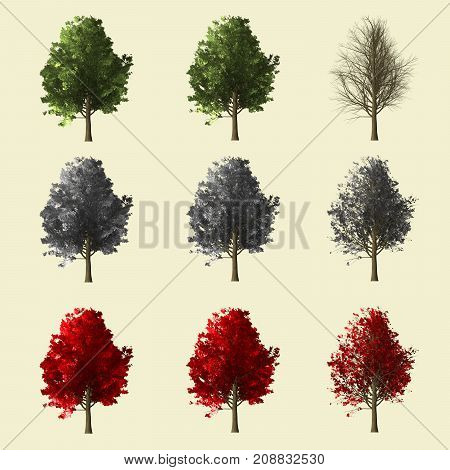 Maple Tree Season Change Set,summer Winter Autumn 3D Rendering Isolated For Landscape Designer.