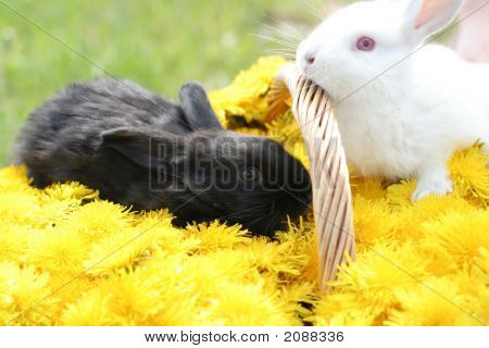 Bunnies in dandelion basket - nice Easter picture poster