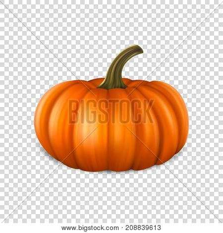 Realistic pumpkin closeup isolated on transparency grid background. Halloween Symbol. Design template, stock vector illustration, eps10.