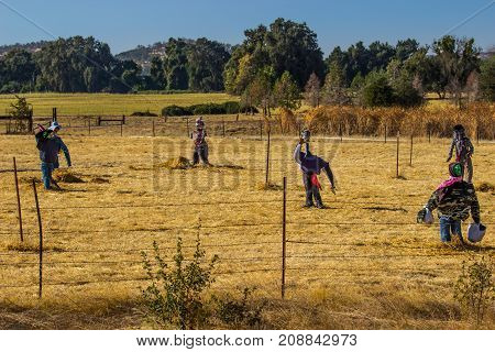Variety Of Halloween Scarecrows In Open Field