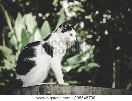 Black & white cat with yellow eyes is looking on nature background