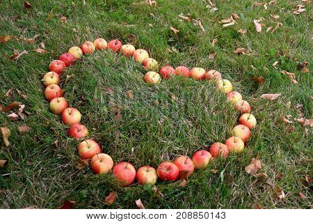 Crabapples placed in a heart shape in the grass