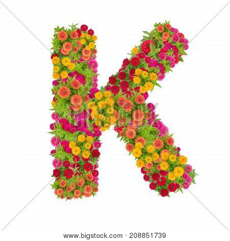 Letter K alphabet made from zinnia flower ABC concept type as logo.Typography design with clipping path