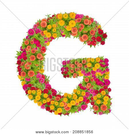 Letter G alphabet made from zinnia flower ABC concept type as logo.Typography design with clipping path