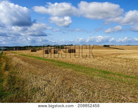 Hay bale stack grain crop in a field great farming agriculture background image