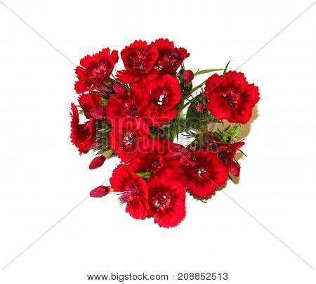 The Flowers Of Charming Small Colored Carnations