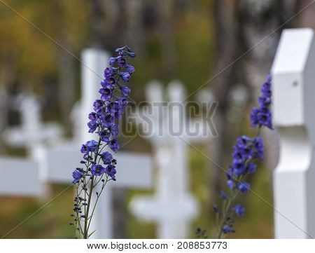 White crosses beyond the vegetation on a cemetery. Autumn, fall colored leaves and plants this side the graveyard.