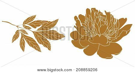 Graphical golden leaf illustration. golden leaf, contour leaf, bloom leaf, decorative leaf, isolate flower, blossom flower, monochrome flower. Vector.
