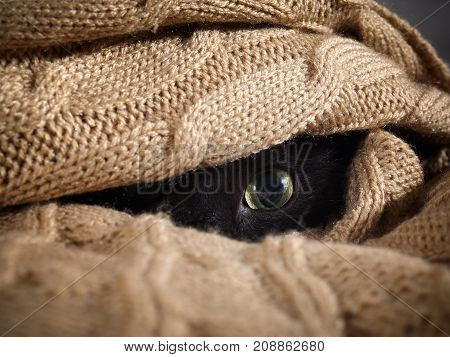 Cat eyes looks out from under knitted blanket