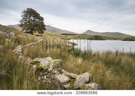 Evening Landscape Image Of Llyn Y Dywarchen Lake In Autumn In Snowdonia National Park
