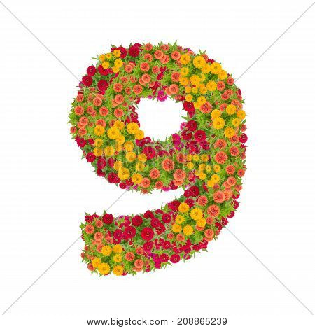 number 9 made from Zinnias flowers isolated on white background.Colorful zinnia flower put together in number nine shape with clipping path