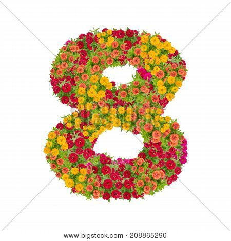 number 8 made from Zinnias flowers isolated on white background.Colorful zinnia flower put together in number eight shape with clipping path