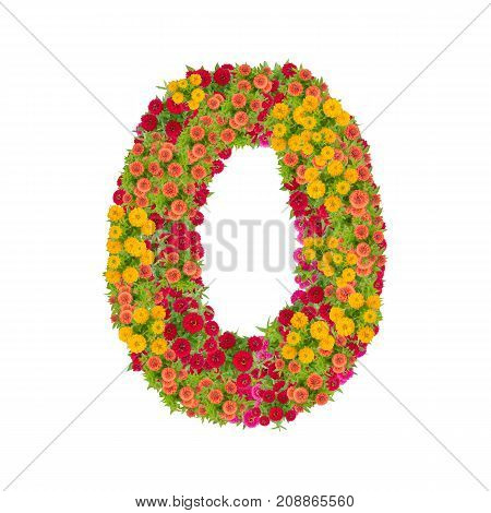number 0 made from Zinnias flowers isolated on white background.Colorful zinnia flower put together in number zero shape with clipping path