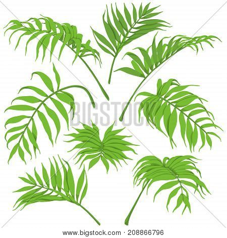Palm fronds isolated on white background. Green leaves set top view and side view. Vector flat illustration.